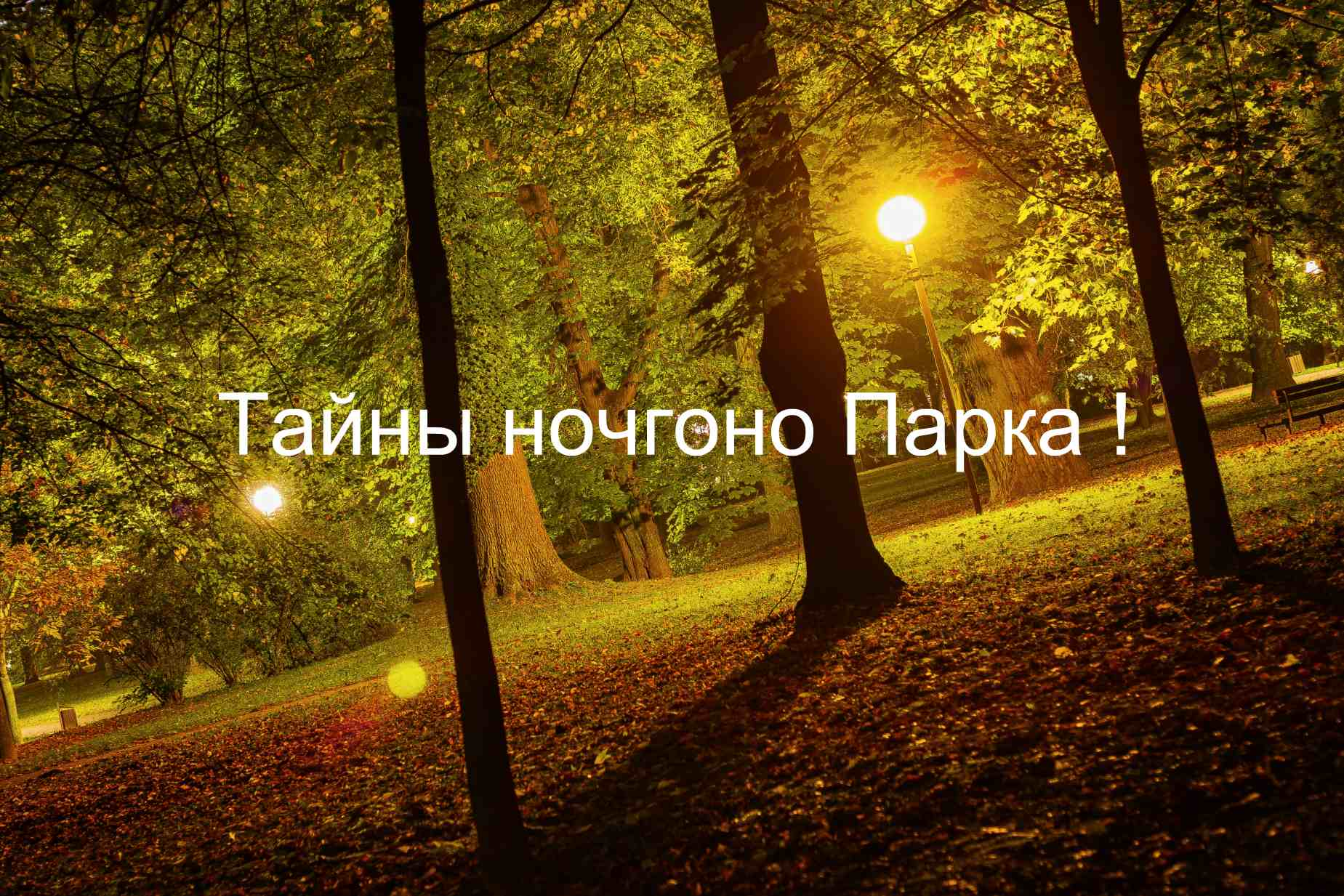 Тайны ночного парка