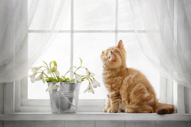 кошка в доме приметы