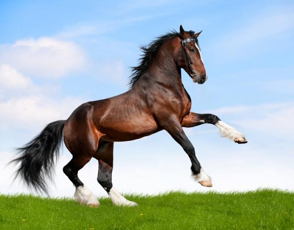Народные суеверия и приметы о лошадях